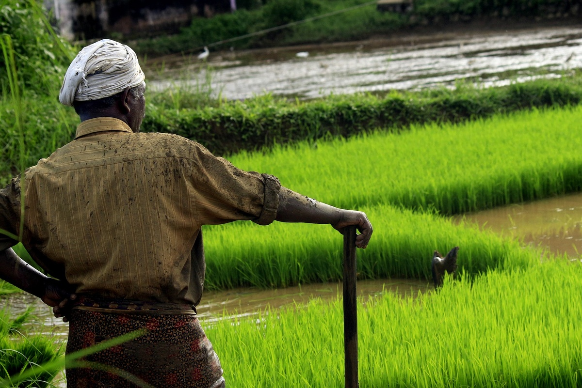 India has the highest number of organic farmers globally, but most of ...