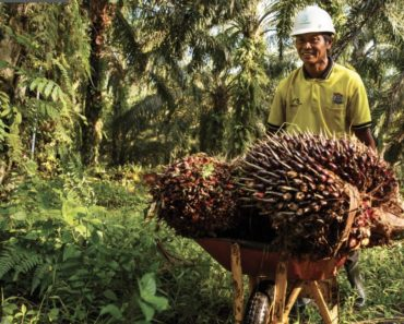 Investors Demand Better Standards for Sustainable Palm Oil Certificati...