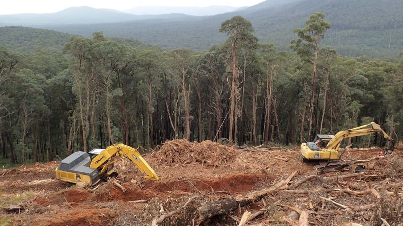 Timber industry bid to prove its green credentials falls flat