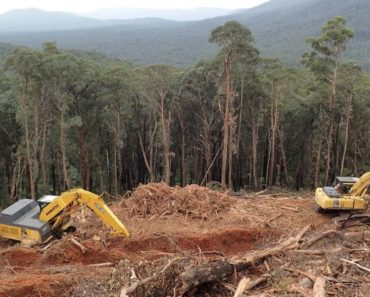 Timber industry bid to prove its green credentials falls flat