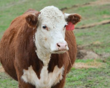 Livestock producers prompted to take Beef Quality Assurance training