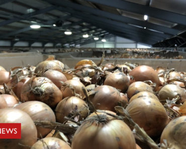 Brexit: Why Dutch fear no deal will leave onions to rot