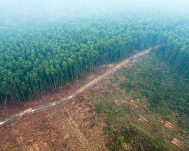 The future of forests: How to balance development with conservation? |...